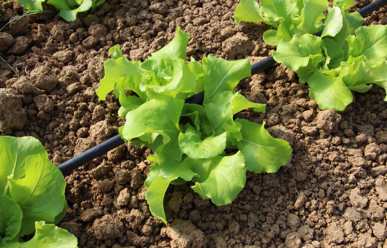 L'orto biologico in affitto che puoi coltivare online