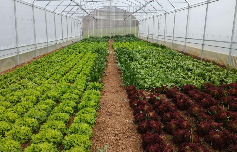 Soluzioni smart per coltivare l'orto in città