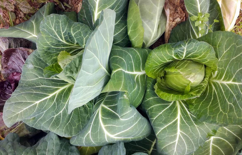 Agricoltura biologica e alimentazione: mangiare sano e naturale per vivere meglio